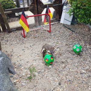 Flocke will DFB-Elf siegen sehen