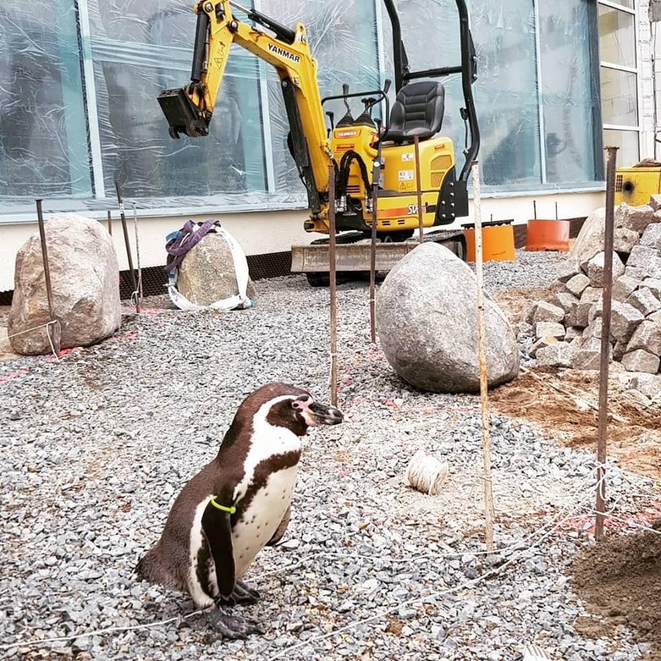 Flocke auf der Baustelle