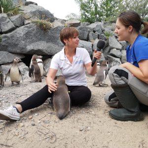 """Unsere Pinguine sind neugierige """"Baubegleiter"""""""