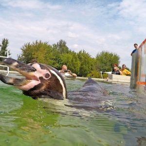 Flocke geht baden