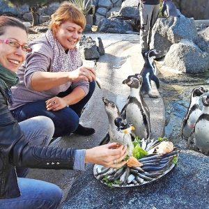 Trauer um Daisy, Flocke, Kitty Tupf und Papageno • lr-online.de