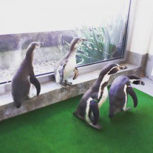 4 Berliner für das neue Pinguinbecken