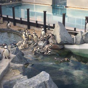 3 Tricks um die Spreewelten-Pinguine auseinanderzuhalten