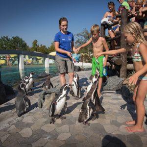 Pinguinfütterungen – mittendrin statt nur dabei